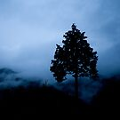 Tree in the Mist by Philip Seifi