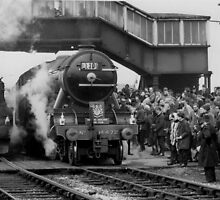 Flying Scotsman  by Garth Dawson