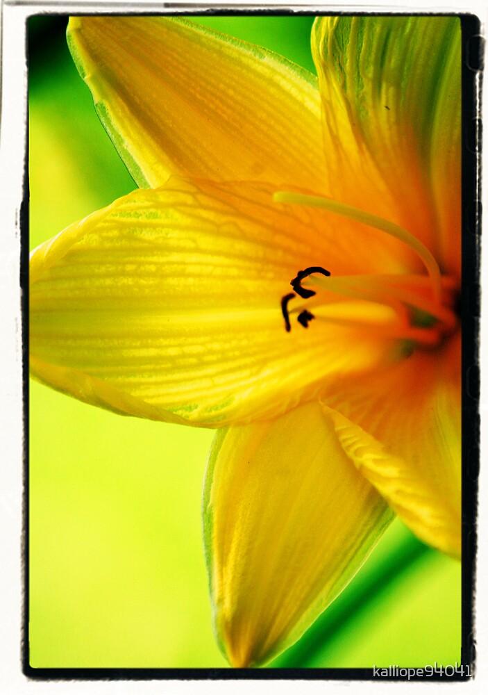 Yellow Daylily by kalliope94041