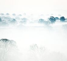 Mist at Dawn by Andrew Bret Wallis