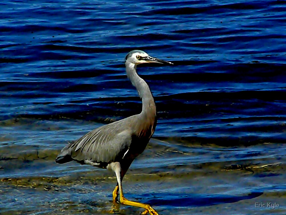 A BLUE DAY FOR A BLUE CRANE by Eric Kyle