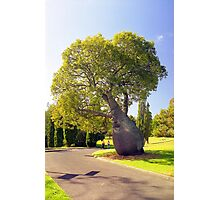A Tree Grows in Sydney  Photographic Print