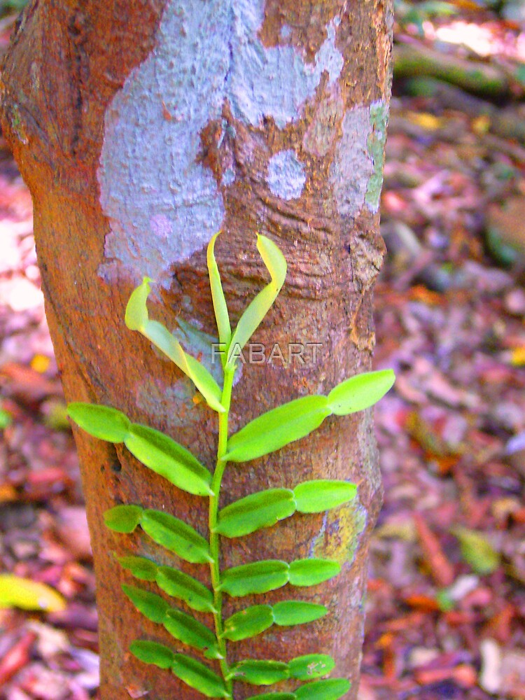 Tree Vine by FABART