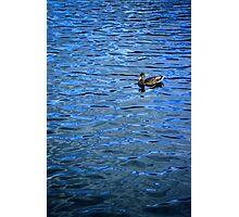 Swim in Blue Photographic Print