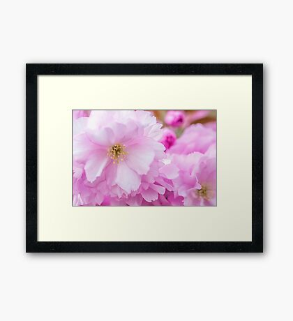 Macro Kwanzan Cherry Flowers Framed Print