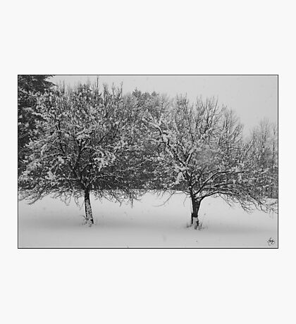 Two Apples in February Snowstorm Photographic Print