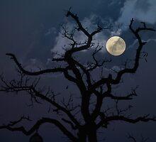 Winter Moon by Andrew Bret Wallis