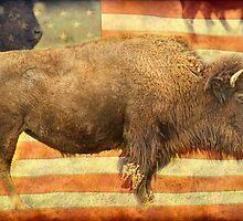 American Buffalo by Bo Insogna