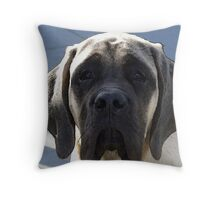 English Mastif Puppy Throw Pillow