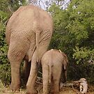 Elephant Family by HelenBanham