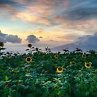 Kula Sunflower Garden by Shari Mattox