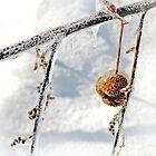 Winter Ornament by Nadya Johnson