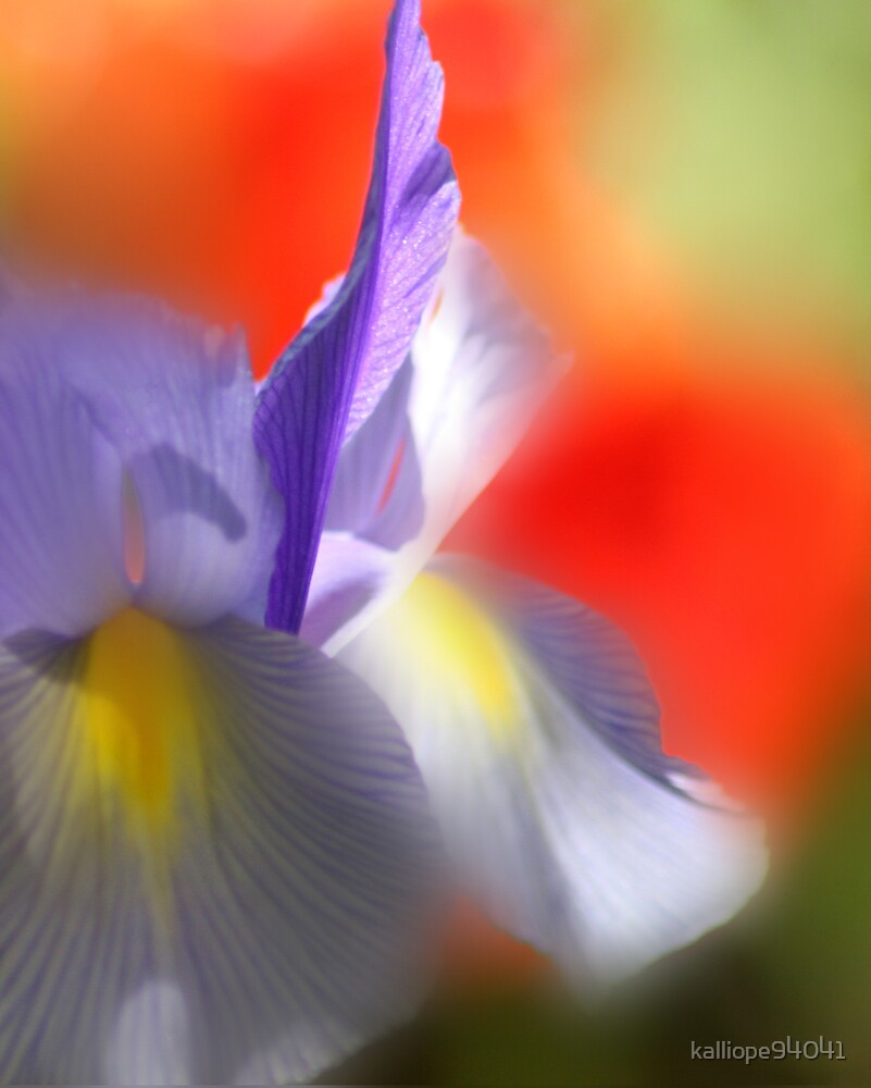 Iris in the Abstract by kalliope94041
