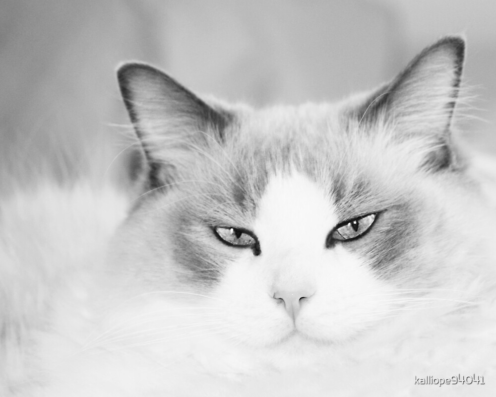 Kitty in Black and White by kalliope94041