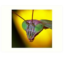 Praying Mantis (2) Art Print