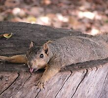 Heat Stroke Squirrel by Daniel  Rarela