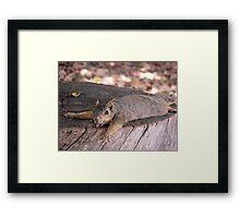 Heat Stroke Squirrel Framed Print