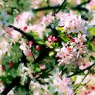 Spring Blossoms by kalliope94041