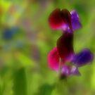 Softly Sweetpeas by kalliope94041