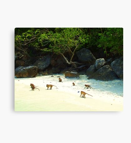 Monkey Beach Canvas Print