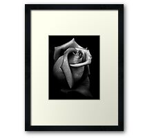 Stone Rose Framed Print