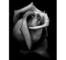 Stone Rose Photographic Print