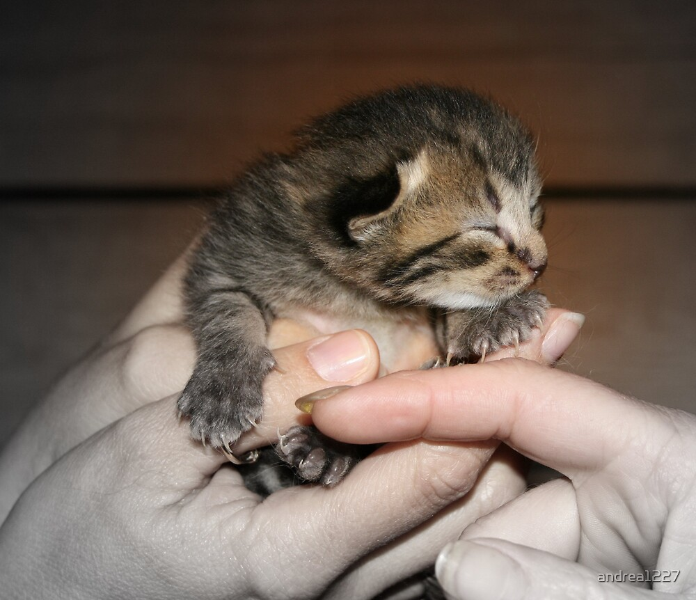 Baby Kitty by andrea1227