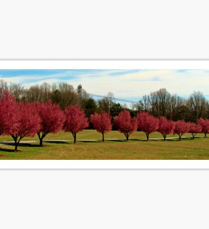 Pear Trees In A Row Sticker