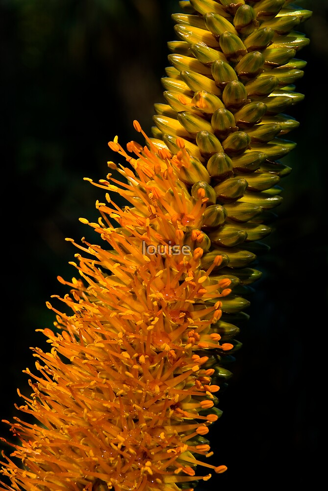 SPECTACULAR  FLORA by louise