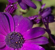 Purple Flower by Nehinei