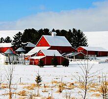 the rural life by Lynne Prestebak