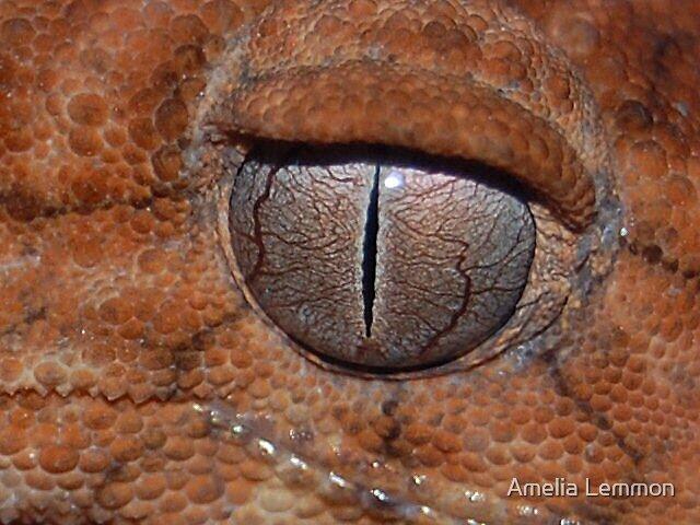 Gecko eye by Amelia Lemmon