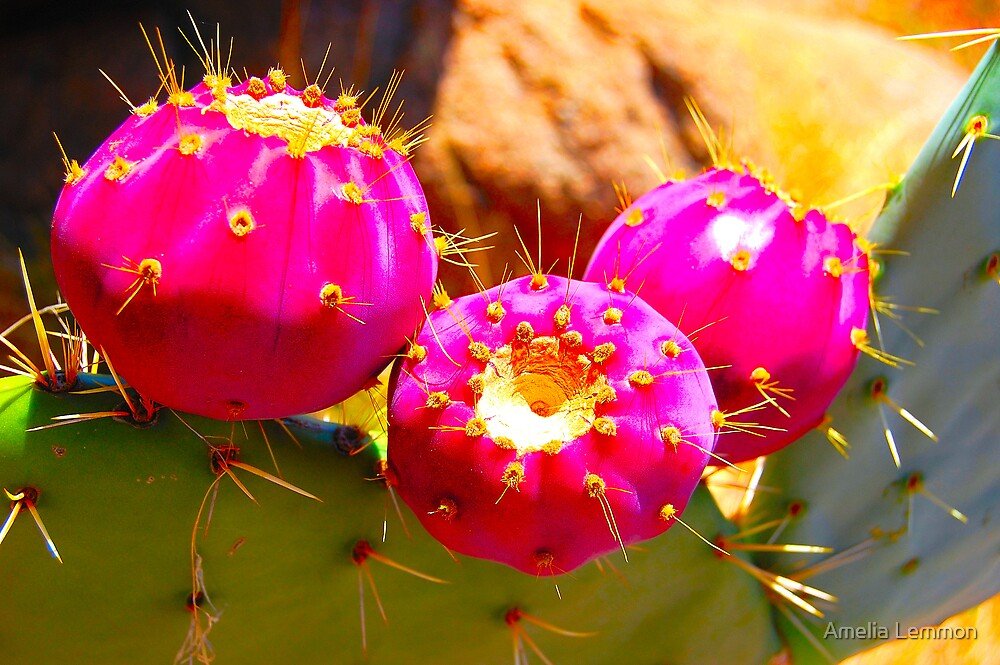 prickly pear by Amelia Lemmon