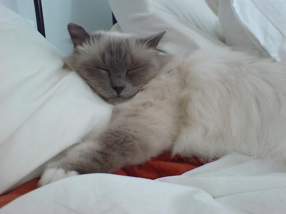 Sleeping Beauty ? by shelagh1312