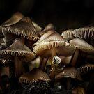 The little snail by EbyArts