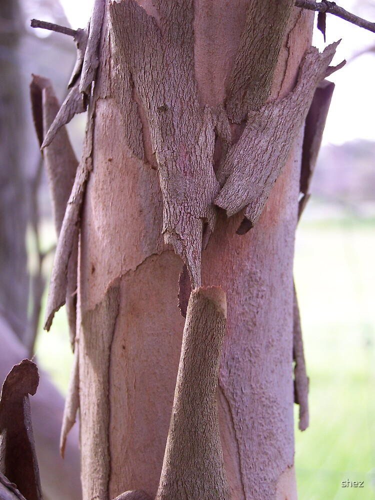 Flaky bark by shez