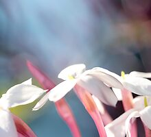 Abstract Jasmine I by Lesley Smitheringale