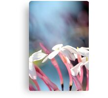 Abstract Jasmine I Canvas Print