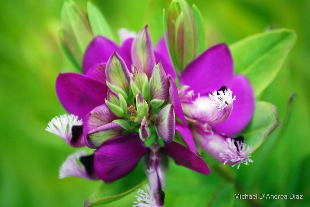 Purple Plant by Michael D'Andrea Diaz