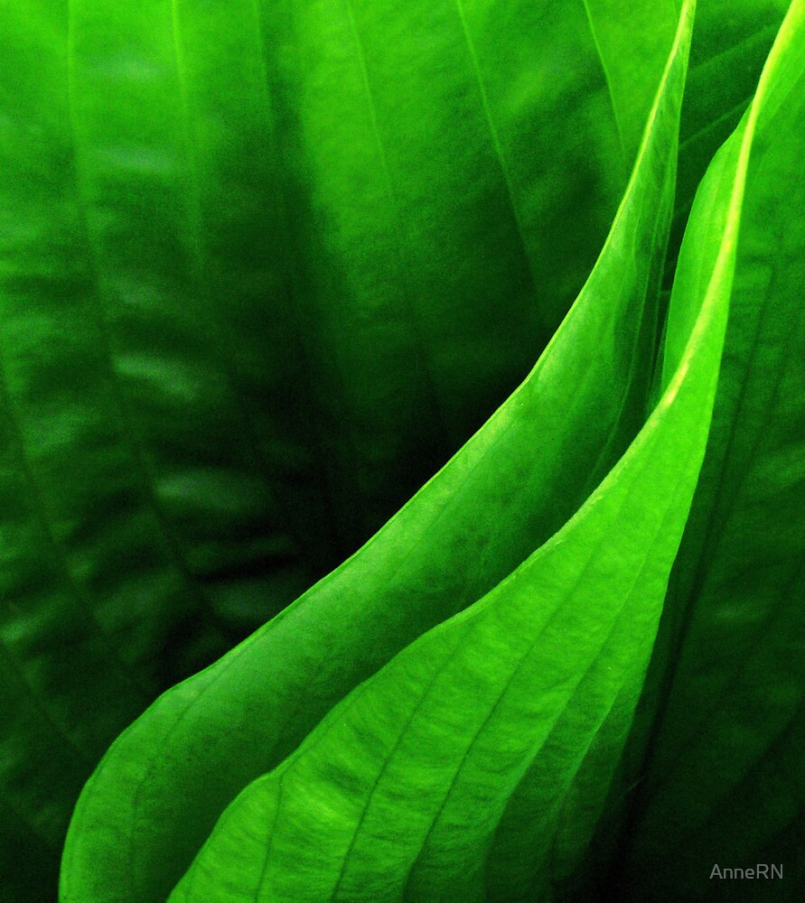 GREENS by AnneRN