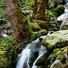 Wet Weather Cascade by Gary L   Suddath