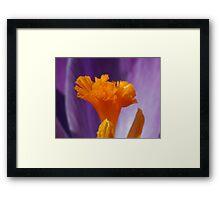 Crocus Stamen Framed Print