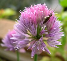 Chives and a bug by football