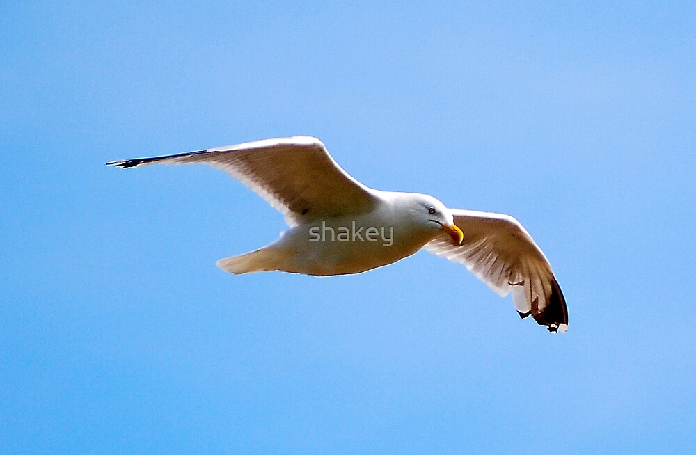 Free as a bird by shakey