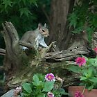 SQUIRREL AMONG THE FLOWERS by Diane Peresie