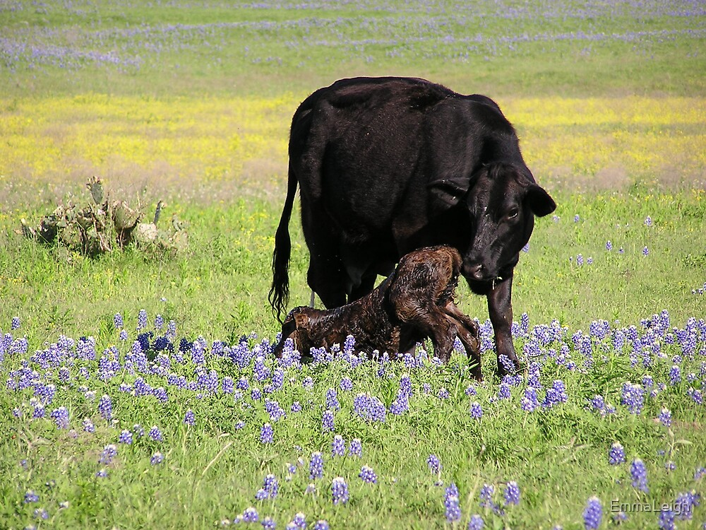 Newborn Calf by EmmaLeigh