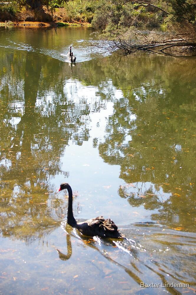 Swan Stream by Baxter Lindeman
