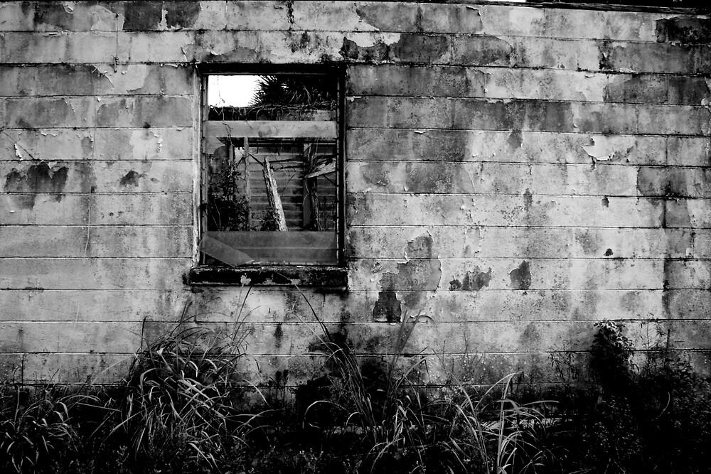 Window by Taylor Jury