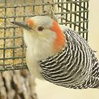 Suet Pecker by lorilee