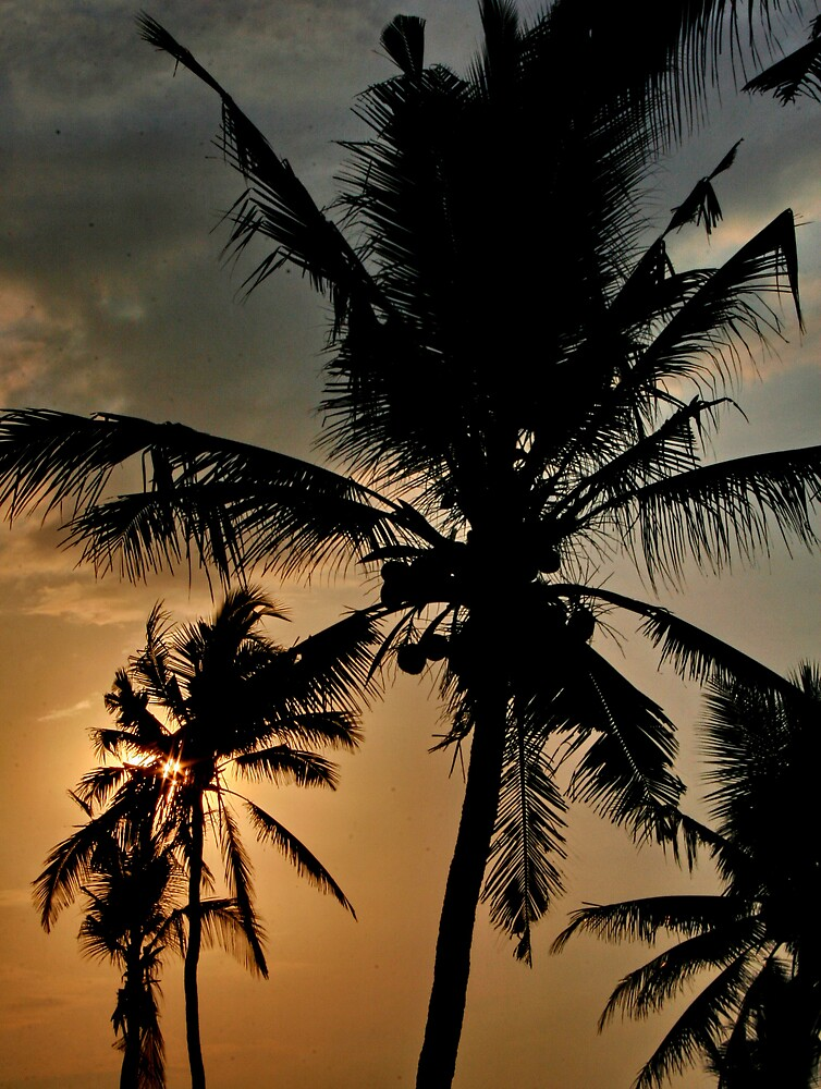 BALI PALMS by CRSPHOTO